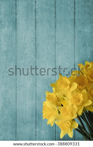Spring bouquet of yellow daffodils, in the lower right corner of a turquoise blue wood plank background. - stock photo