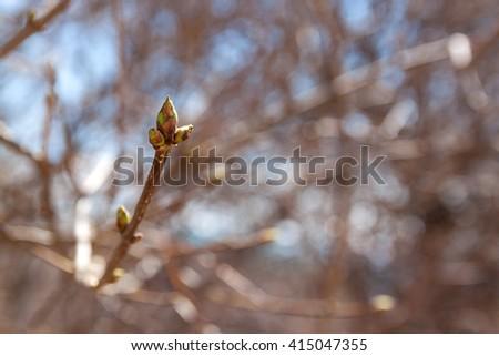 Spring branch of Tree, bud on thr tree branch - stock photo