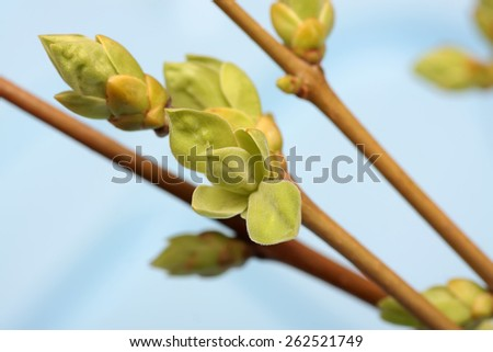 Spring branch of Tree,Tree stick against blue sky background. - stock photo