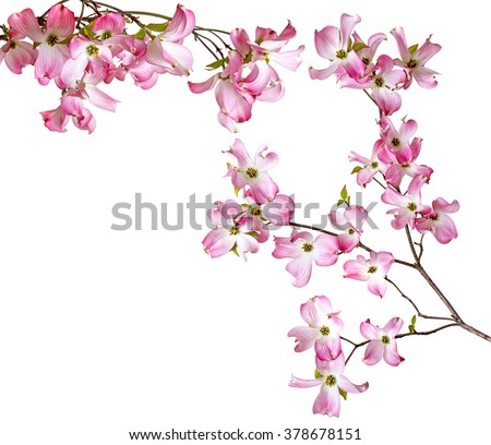 spring  branch with flowers - stock photo