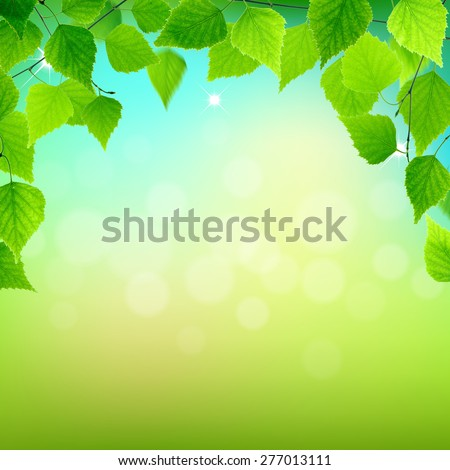 Spring branch with fresh green leaves on natural background. - stock photo