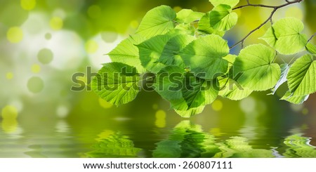 Spring branch with leaves reflection in water, nature green background - stock photo