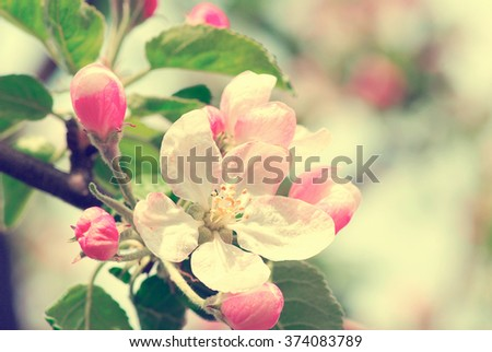 spring branch with white flowers - stock photo