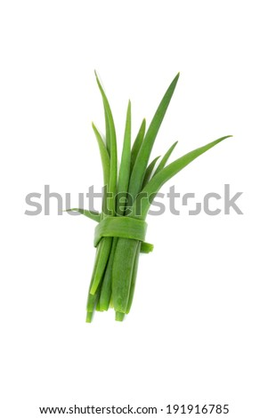 spring bright green leek closeup