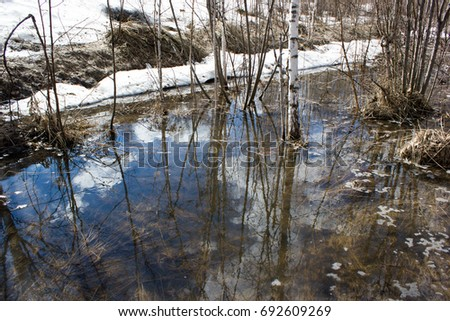 Spring brook in a birch forest