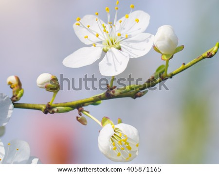 Spring bud flower. Composition of nature. - stock photo