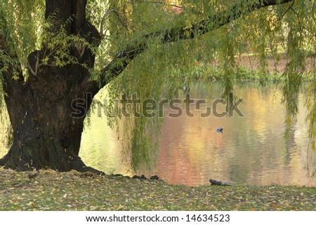Spring by the Pool - stock photo
