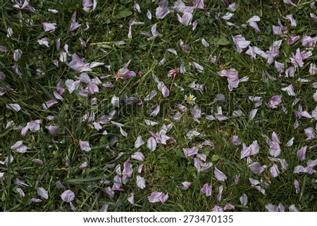 Spring carpet of pink petals on green grass