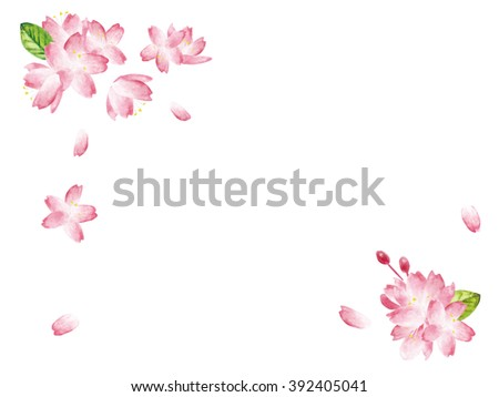 Spring Cherry blossoms  - stock photo