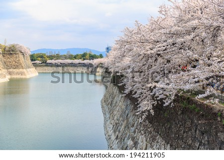 spring cherry blossoms at osaka castle fortress - stock photo
