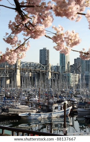 Spring cherry blossoms frame the Burrard Street Bridge and the marina near Granville Island in downtown Vancouver, British Columbia, Canada. - stock photo