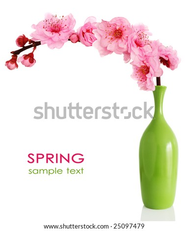Spring cherry tree blossoms in a green vase isolated on white background. - stock photo