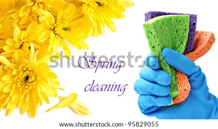 Spring cleaning concept.  Gloved hand with colorful sponges on white background with yellow mums and copy space. - stock photo
