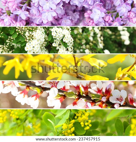 Spring collage - stock photo