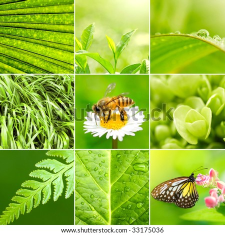 Spring collage background. All image belongs to me. - stock photo