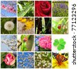 Spring collage showing different spring pictures - stock photo