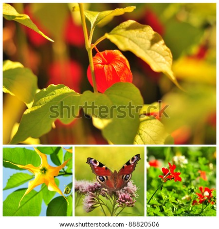 Spring. Colorful flowers and flowering trees. Collage - stock photo