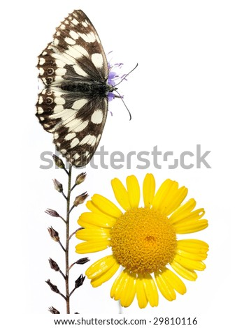 spring concept. butterfly and flora against white background.