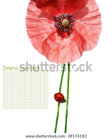 spring concept. flora and lady bug against white background. - stock photo