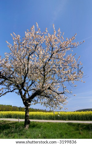 Spring countryside with blooming tree - look at my portfolio to other photos