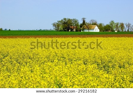 Spring countryside with field of yellow flower and farm house on a horizon. - stock photo