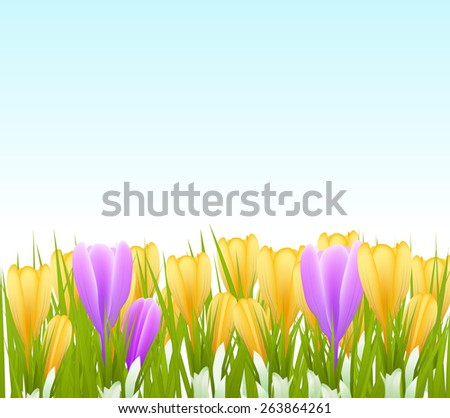 spring crocus flowers background. raster version - stock photo