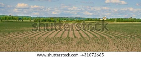 Spring crop in rural Ontario