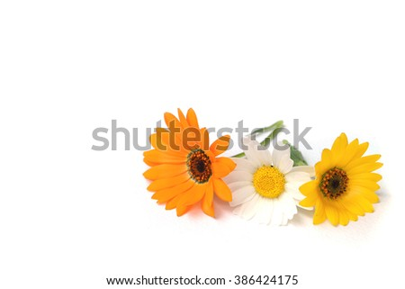 spring daisy flower assortment in the white #3