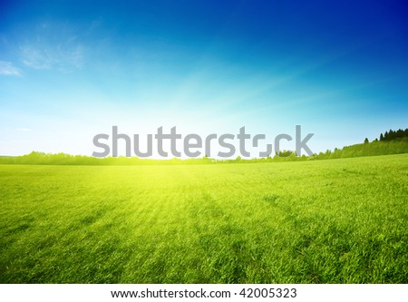 spring day and green field - stock photo