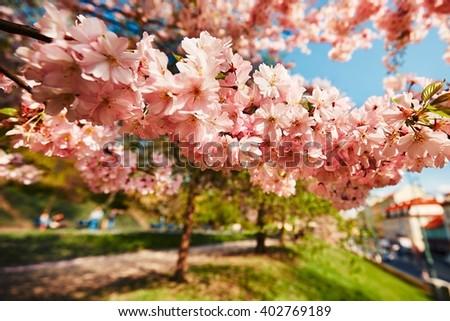 Spring day in the city park, Prague, Czech Republic  - stock photo