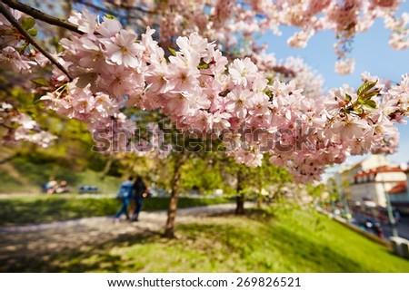 Spring day in the city, Prague, Czech Republic - stock photo