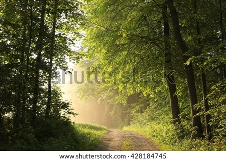 Spring deciduous forest on a foggy morning. - stock photo