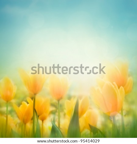 Spring Easter background with beautiful yellow tulips. Summer flower background. - stock photo