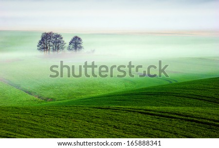 Spring farm - stock photo