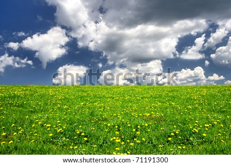 Spring field - stock photo