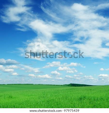 spring field - stock photo