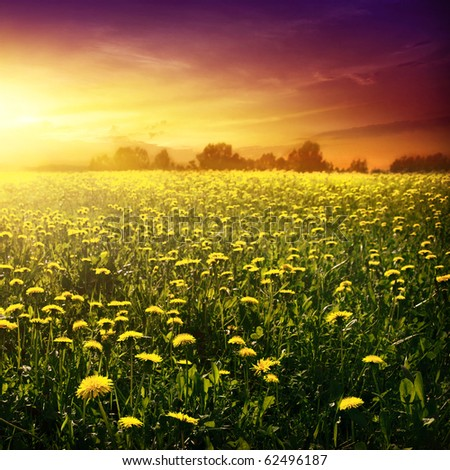 Spring field and beautiful sunset. - stock photo