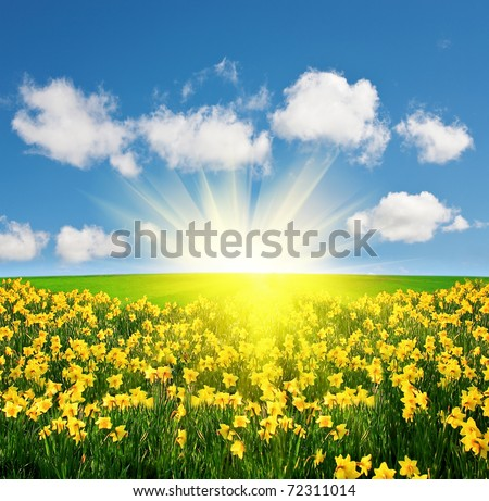 Spring field and sun - stock photo