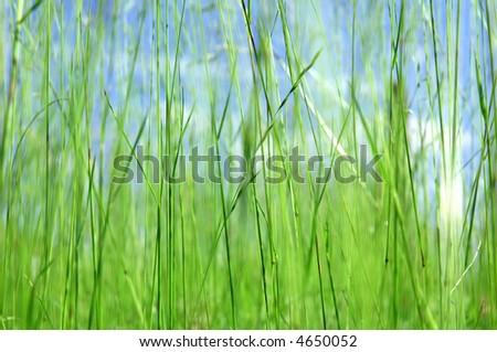 spring field background - stock photo