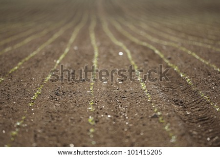 Spring field, Europe - selective focus - stock photo