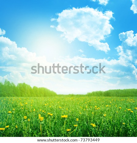 Spring field in morning time. - stock photo