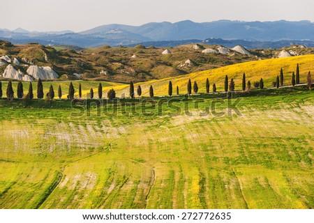 Spring field in the Crete Senesi, Tuscany - stock photo