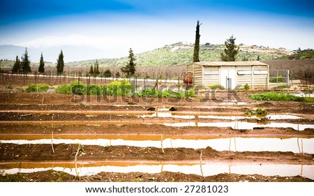 Spring Field On The Hermon Mountain Background. Israel - stock photo