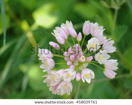 Spring field pink flower closeup on the grass. The effect of oil paint. - stock photo