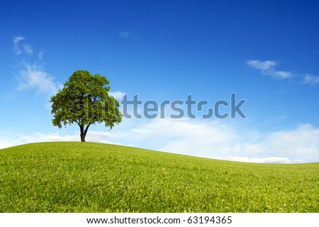 Spring field wit lone tree - stock photo