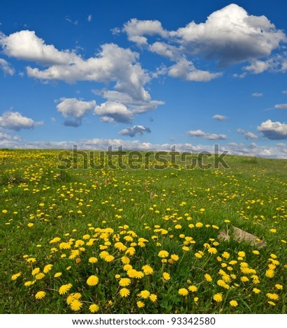 spring field with dandelions - stock photo