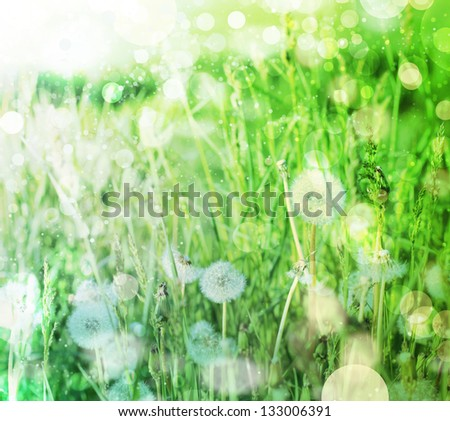 Spring field with dandelions on bright sunny day/ Spring background - stock photo