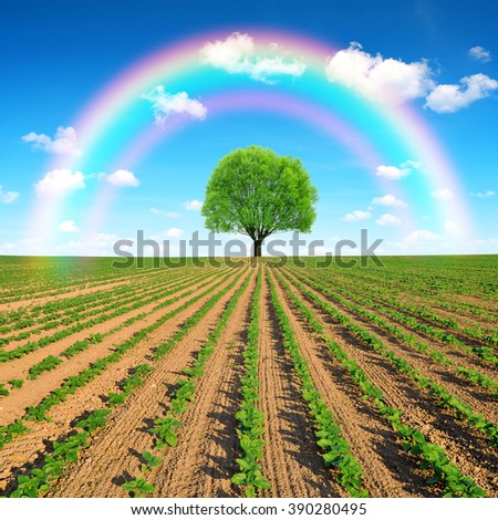 Spring field with tree and rainbow. - stock photo