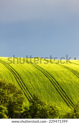 spring field with trees, Plateau de Valensole, Provence, France - stock photo