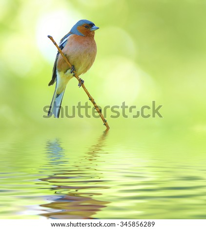 spring finch on a branch. On an abstract green background - stock photo